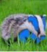 qpr_badger